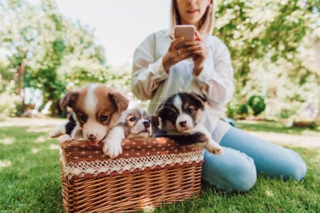 Photo for Cropped view of blonde girl sitting in green garden and using smartphone near wicker box with adorable puppies - Royalty Free Image