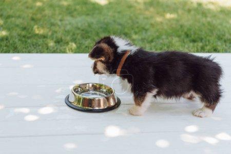 Foto de Lindo cachorro beber agua de plata tazón de mascotas en la construcción de madera en el jardín - Imagen libre de derechos
