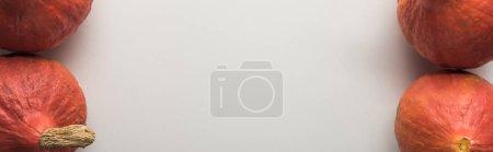 Photo pour Vue supérieure des citrouilles mûres sur le fond blanc, projectile panoramique - image libre de droit