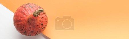 Photo pour Vue de dessus de citrouille mûre sur fond blanc et orange, panoramique - image libre de droit