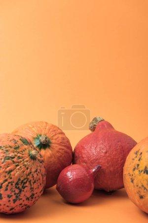 Photo pour Citrouilles naturelles mûres sur fond orange - image libre de droit