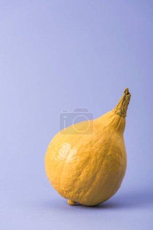 Foto de Calabaza pintada de color amarillo sobre fondo violeta - Imagen libre de derechos