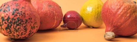 Photo pour Plan panoramique de citrouilles mûres de saison sur fond orange - image libre de droit