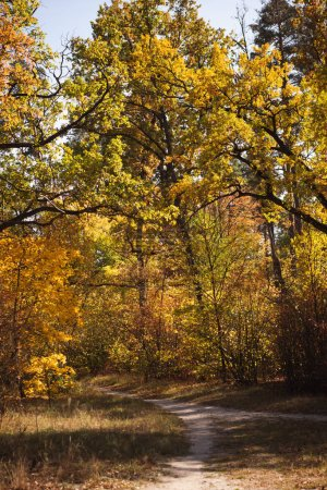 Photo for Scenic autumnal forest with golden foliage and trail in sunlight - Royalty Free Image
