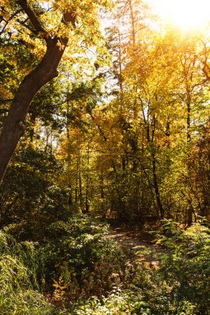 Photo for Scenic autumnal forest with golden foliage in sunshine - Royalty Free Image