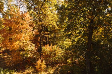 Photo for Scenic autumnal forest with golden foliage in sunlight - Royalty Free Image