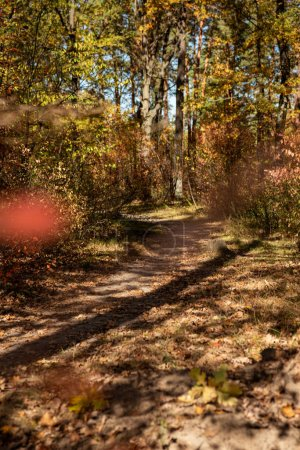 Photo for Scenic autumnal forest with golden foliage and path in sunshine - Royalty Free Image