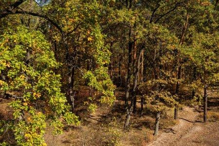 Photo pour Paysage de forêt automnale et sentier à la lumière du soleil - image libre de droit