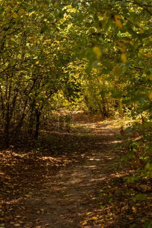 Photo for Picturesque autumnal forest with golden foliage and path in sunlight - Royalty Free Image
