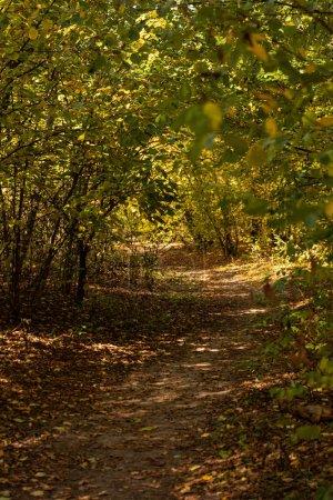 Photo pour Forêt automnale pittoresque avec feuillage doré et sentier ensoleillé - image libre de droit