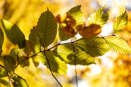 Photo for Close up view of golden foliage on tree branch in sunlight - Royalty Free Image