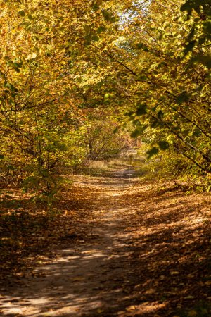 Photo for Scenic autumnal forest with golden foliage and pathway in sunlight - Royalty Free Image