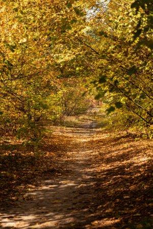 Photo pour Forêt automnale pittoresque avec feuillage doré et sentier à la lumière du soleil - image libre de droit