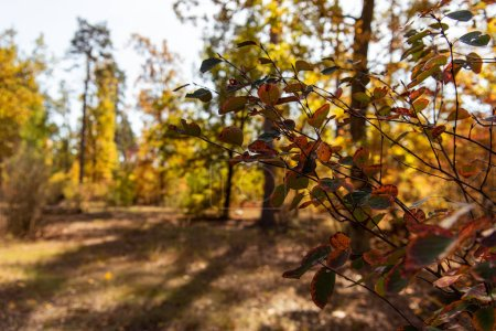 Photo pour Concentration sélective des branches dans la forêt automnale à feuillage doré - image libre de droit