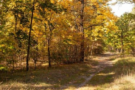 Photo pour Forêt d'automne pittoresque avec feuillage doré et sentier ensoleillé - image libre de droit