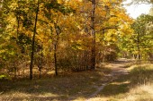 scenic autumn forest with golden foliage and path in sunlight