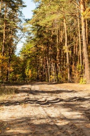 Foto de Bosque escénico autumnal con follaje dorado y sendero bajo la luz del sol. - Imagen libre de derechos