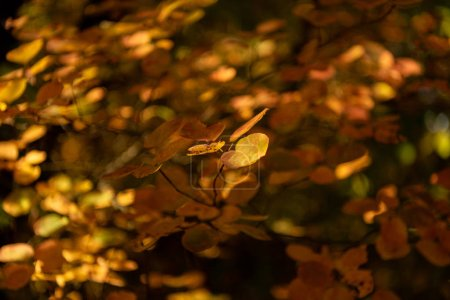 Photo for Close up view of autumnal golden foliage - Royalty Free Image