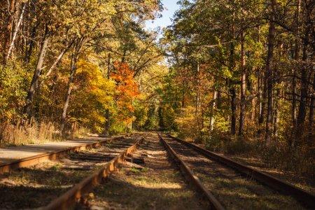 Photo pour Chemin de fer dans une forêt automnale pittoresque avec feuillage doré au soleil - image libre de droit