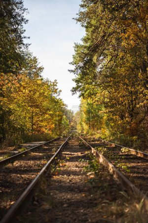 Photo for Railway in scenic autumnal forest with golden foliage in sunlight - Royalty Free Image