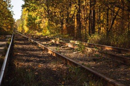 Photo pour Chemin de fer en forêt automnale avec feuillage doré au soleil - image libre de droit