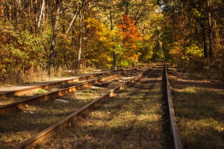 railway in autumnal forest with golden foliage in sunlight
