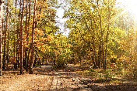 Photo pour Forêt automnale pittoresque avec feuillage doré, sentier et soleil brillant - image libre de droit