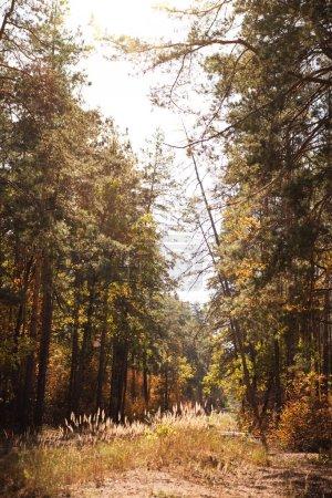 Photo pour Pittoresque forêt automnale avec feuillage doré et soleil - image libre de droit
