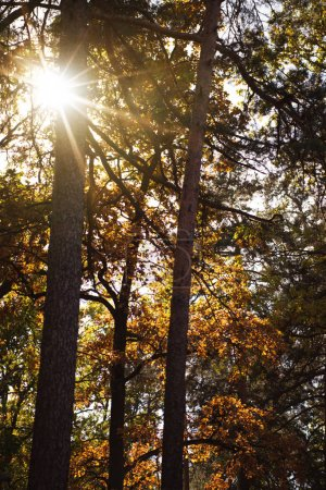 scenic autumnal forest with trees in sunlight