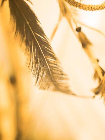 Photo pour Plume au soleil - image libre de droit