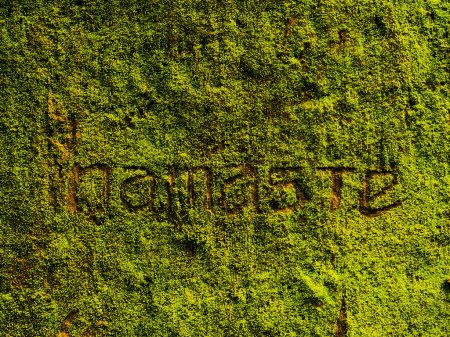 Photo for Green moss and leaves on the rock, namaste text - Royalty Free Image