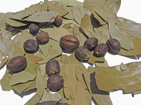 Fruit of Knema Attenuata. Wild Nutmeg & Tej Patta, Laurus nobilis L.