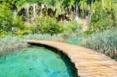 waterfall anf tree in the national park of plitvice lakes in croatia on a sunny day
