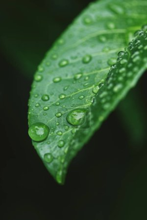 close up of green leaf with water drops after rain