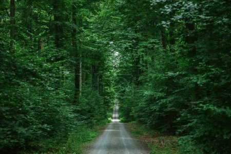 road in green beautiful forest in Wurzburg, Germany