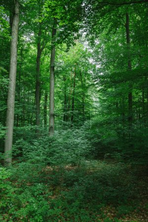 beautiful trees with green leaves in forest in Wurzburg, Germany