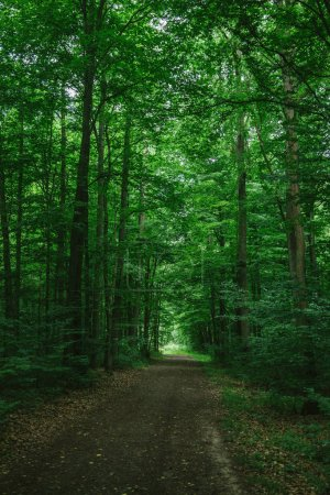 narrow road in green beautiful forest in Wurzburg, Germany