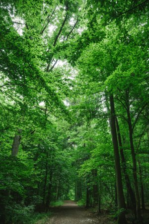 Photo for Path in beautiful forest, trees with green leaves in Wurzburg, Germany - Royalty Free Image