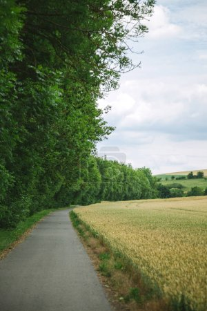 road between beautiful forest and field in Wurzburg, Germany