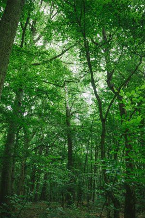 trees with green leaves in forest in Wurzburg, Germany