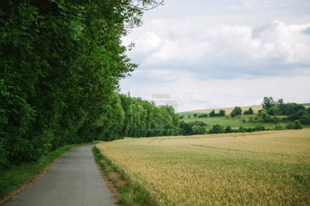 Photo for Road between beautiful green forest and field in Wurzburg, Germany - Royalty Free Image