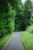 asphalt road to green beautiful forest in Wurzburg, Germany
