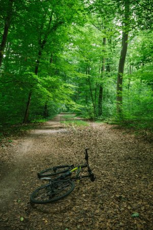 Photo for Bike lying on path in green beautiful forest in Wurzburg, Germany - Royalty Free Image