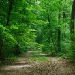 Path between trees in green beautiful forest in Wurzburg, Germany