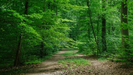 Photo for Path in green beautiful forest in Wurzburg, Germany - Royalty Free Image
