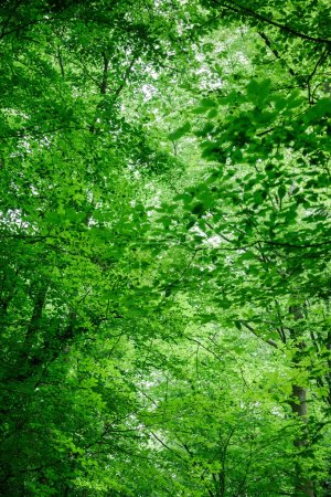 low angle view of green trees with leaves in forest in Wurzburg, Germany