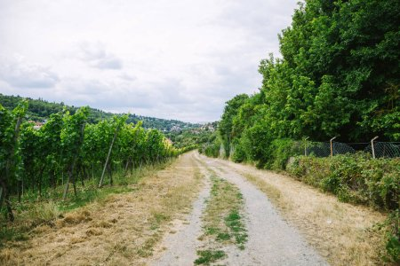 Photo for Road to village and vineyard with trees on sides in Wurzburg, Germany - Royalty Free Image