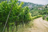 road to village and green vineyard in Wurzburg, Germany