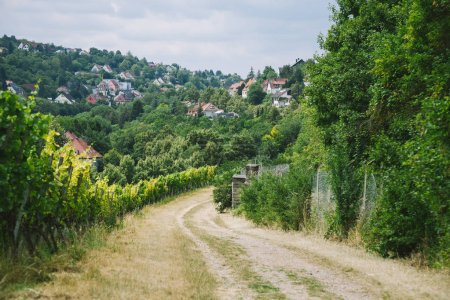 Photo for Rural road to village and vineyard with trees on sides in Wurzburg, Germany - Royalty Free Image