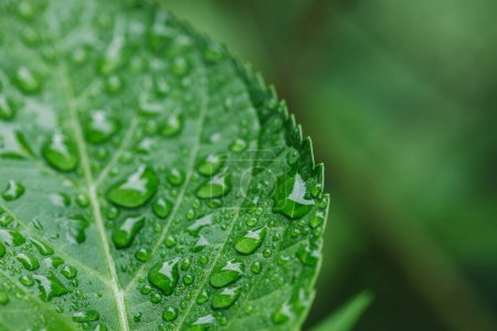 close up view of water drops on green leaf